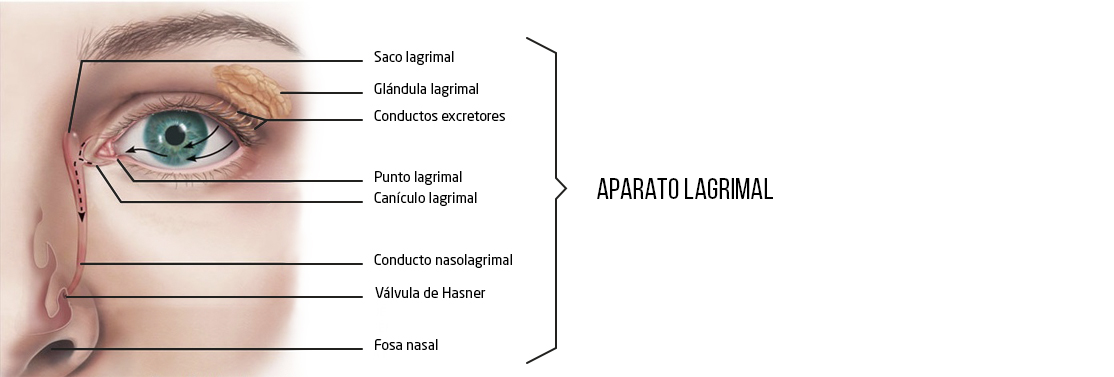 Aparato Lagrimal